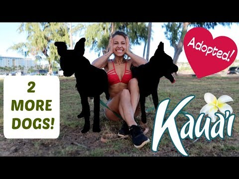 I Adopted 2 Dogs In Kauai!!