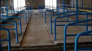 Строительство фермы КРС на 220 голов 5-я часть(Ферма крс мясного направления., 2013-03-02T23:58:54.000Z)