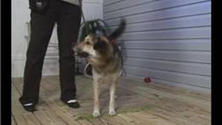 Basic Dog Training : Dog Training: Wait Command