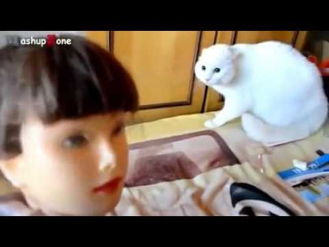 Best Funny cats Vine 2017/2018