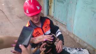В Караганде спасатели вызволили щенка из двухдневного бетонного плена