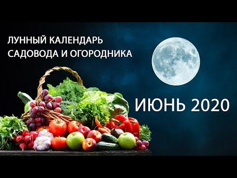 Лунный календарь садовода на июнь 2020