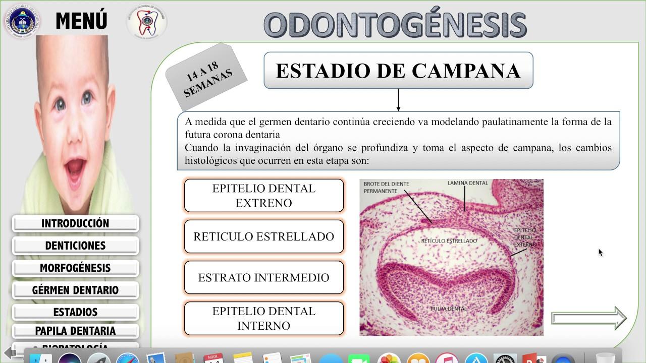 odontogenesis