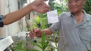 150k có một giỏ hoa phong lan 21/8 0977889359 văn giang, hưng yên