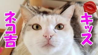 セクシーな唇に激しい猫キス!? A kiss of a cat