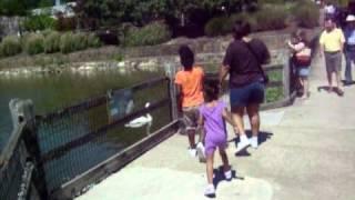 Birmingham Zoo Trip Thumbnail