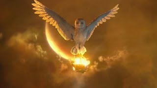 Owl sighting meaning