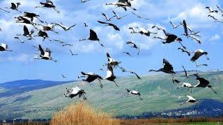 Возвращаются птицы...(песня из фильма