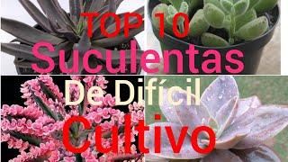 Cultivo De Plantas Suculentas
