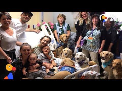 Las Vegas Shooting: Comfort Dogs Help Las Vegas Natives Heal | The Dodo