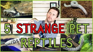 five-of-the-weirdest-pet-reptiles-you-could-possibly-get