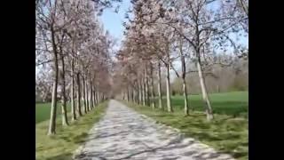 Royal Paulownia tree entrance on my friends beautiful farm