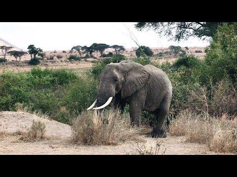 World Cutest  Elephant // Africa Safari // Ruaha National Park //Tanzania