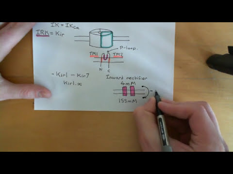 Ion channels and cancer Part 2
