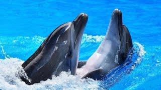 """Дельфинарий """"Колизей"""" / шоу дельфинов и морских котиков / фото и плавание с дельфинами"""