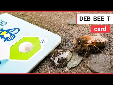 Scheme to save tired bees using recycled bank cards | SWNS TV