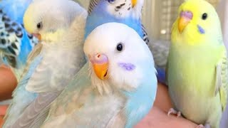 Cutest animals in The world 🌎 | Supper funniest pets | Animal Planet Ever #10