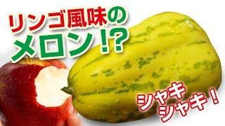 【珍しい野菜・フルーツ】アップルメロン~リンゴ味のメロン?~