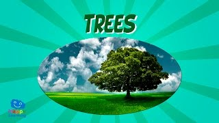 Trees | Educational Video for Kids