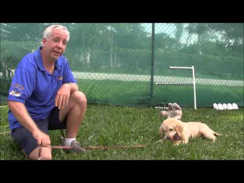 PUPPY TRAINING: How to play tug of war with your puppy
