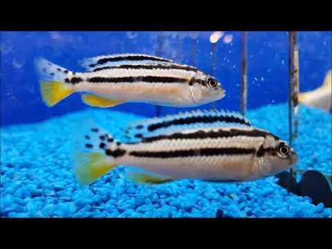 10 Fische für Aquarien ab 200 - 300 Liter