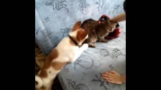 Кто сказал что кошки не любят собак