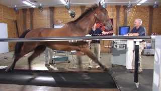 Horse on a treadmill: Maryland Game - Virginia Tech