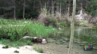 El camping La puerta y el rio alhárabe