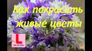 Как покрасить живые цветы. Опыт с водой и цветами. Красим хризантемы.