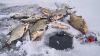 Ловля леща на поплавок зимой// Зимняя рыбалка