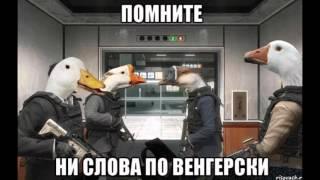 Гуси и Путин, восстание гусей, месть Путину, прикол