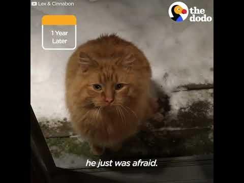 Вопрос: Как завоевать доверие дикого котенка?