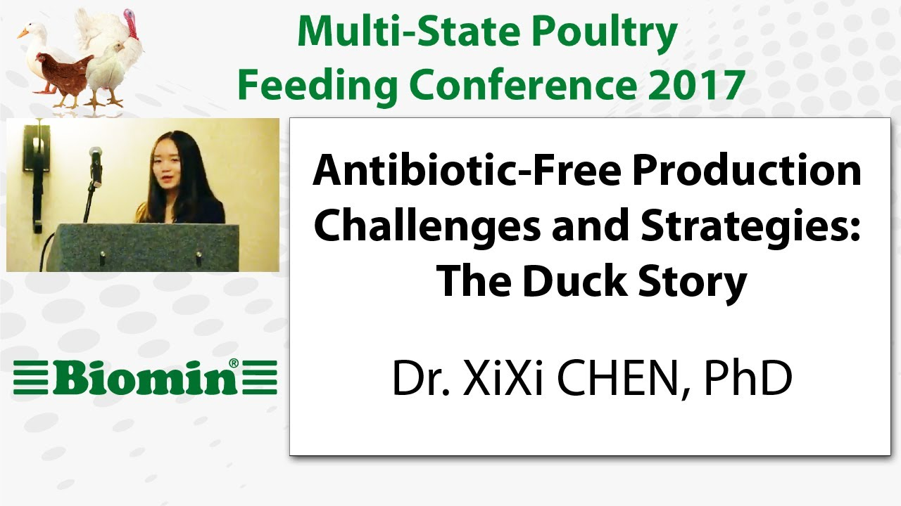Antibiotic-Free Production Challenges and Strategies: The Duck Story