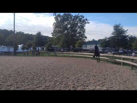 Lakeshore(Uber/Taxi) with Jessica Barno 2016 adult hunter 2nd round