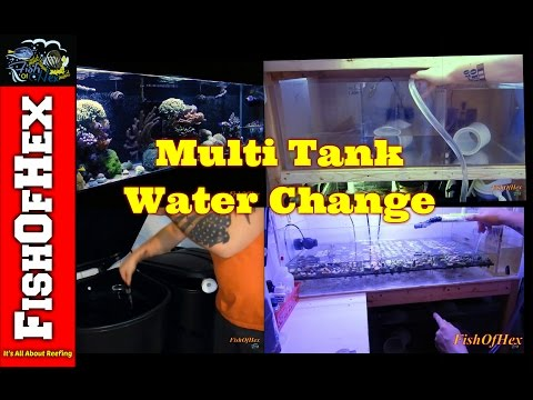 Saving Money When Doing A Multi Tank Water Change & RO/DI Setup