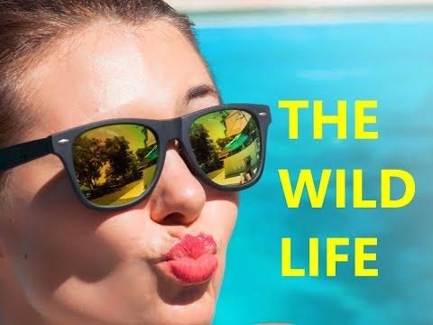 The Wild Life 14