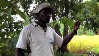 Farming and Water Management in Mto wa Mbu: Arusha Region Tanzania