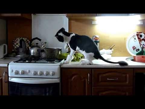 Нарезка из самых смешных видео с котами.