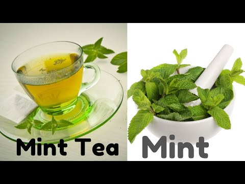 Mint tea Benefits and side Effects,