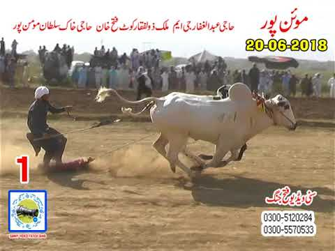 Bul Race In Pakistan Sunny Video Fateh Jang  NO1