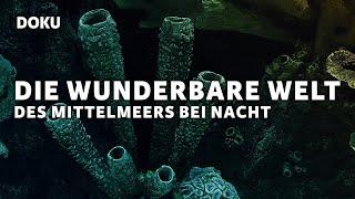 Die Wunderbare Welt des Mittelmeers Bei Nacht (Dokumentation deutsch, Unterwasser, Fische)