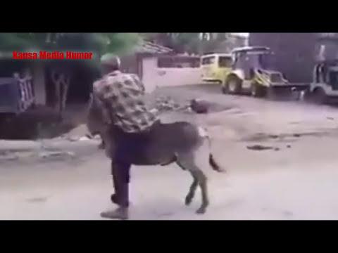Video Lucu Kuda Poni Minta Kawin