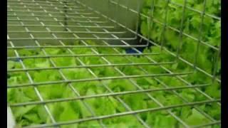 Tecnoceam Baby Leaf Salad Processing Line