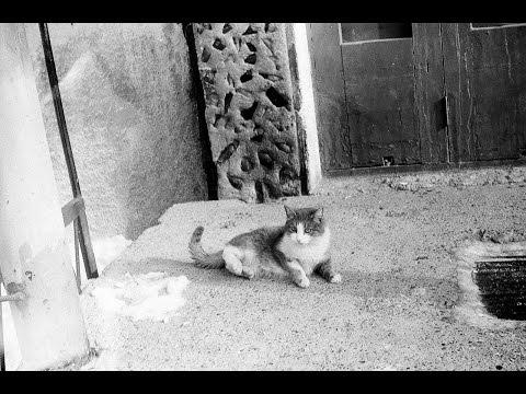 Кошка Тиша! Посвящается Кошкиной Тишке Олеговне)) (На смерть живого существа)