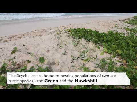Habitat 4 - Sandy Beach