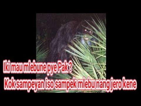 Mengerikan, Pria ini Disembunyikan Genderuwo 3 Jam di Rumpun Bambu