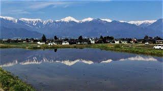 信州の松本と安曇野の春です。水を張った田に北アルプスが映ります。 美...