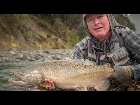 Fly Fishing New Zealand - Salmon On A NYMPH?!