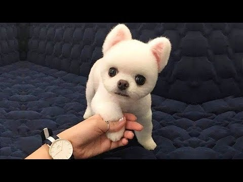 Cute Puppies  Cute Funny and Smart Dogs Compilation #2   Cute Buddy