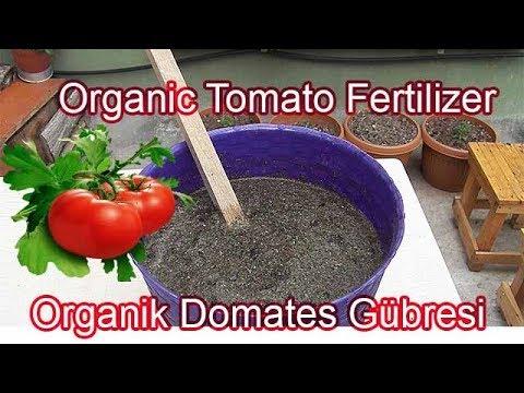 Ev Yapımı Domates Gübresi Tarifi / How To Make Homemade Tomato Fertilizer